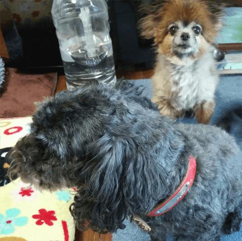 ミックス犬多頭飼い