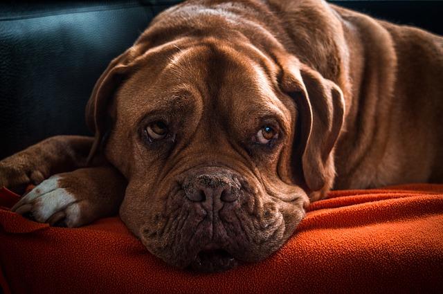 老犬 何歳