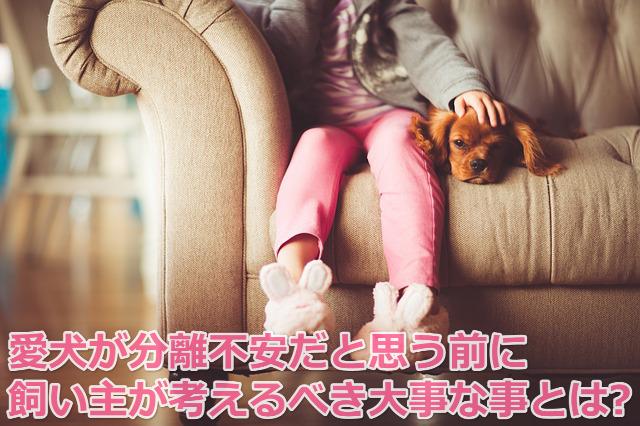 犬 分離不安