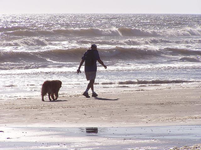 老犬 散歩