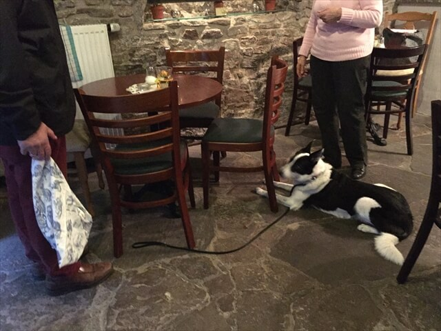 犬とレストラン