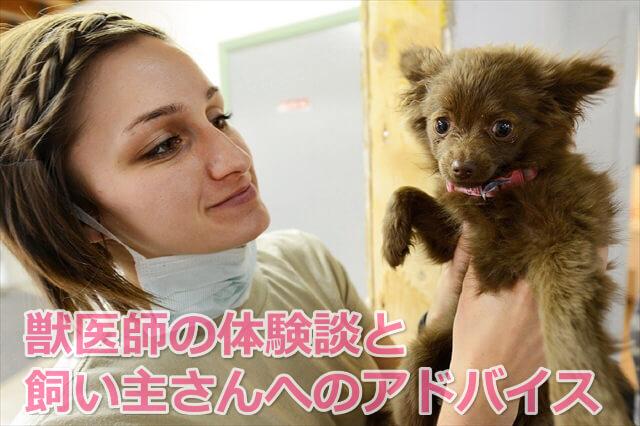 獣医師体験談